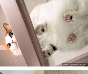 Koty vs szkło