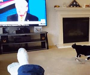 Nawet koty boją się Trumpa