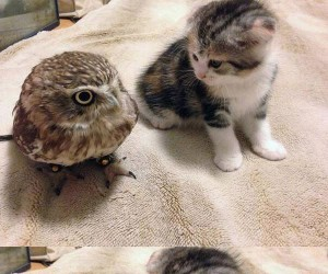 Mała sówka i kot