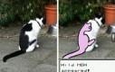 Ten kot ma rzadkiego poksa na grzbiecie