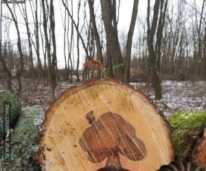 Drzewo w drzewie? Żaden problem!