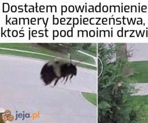 Świadkowie Jehowy wchodzą na nowy poziom