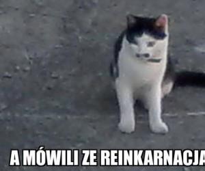 Kot z III Rzeszy