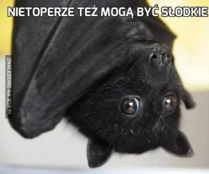 Nietoperze też mogą być słodkie