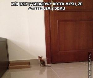 Mój trzytygodniowy kotek myśli, że wyszedłem z domu