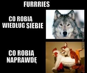 Prawda o Furry