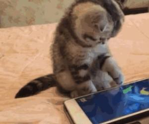 Aplikacja, która zajmie twojego kota