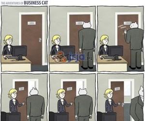 Bizneskot chce wejść