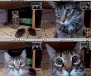 Kot rozpoznał właściciela podczas rozmowy video