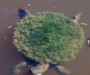 Prywatna wyspa żółwia