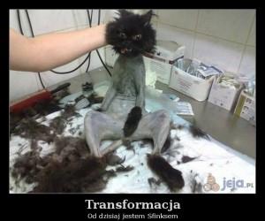 Transformacja