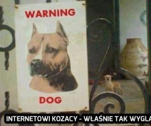 Internetowi kozacy