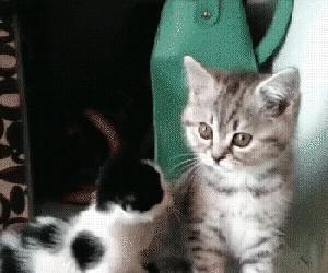 Ej, co ty robisz? Weź mnie zostaw...