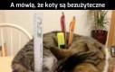 Funkcjonalny kot
