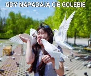 Gdy napadają Cię gołębie
