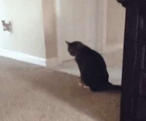 Co robisz koteł?