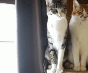Są dwa typy kotów...