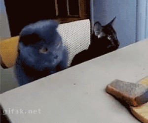 Daj mi ten chleb!
