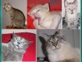 Humory kotków