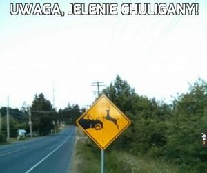 Uwaga, jelenie chuligany!