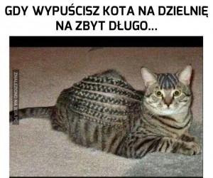 Ej, co to za fryz?
