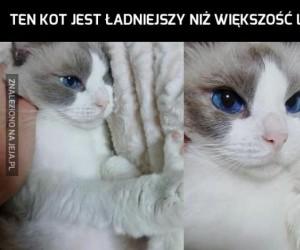 Doprawdy, ten kot ma coś w sobie