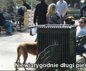 Niewiarygodnie długi pies