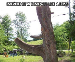 Rzeźbienie w drzewie like a boss
