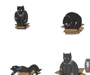 Wyrośnięty, ale przecież kociak...