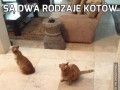 Są dwa rodzaje kotów