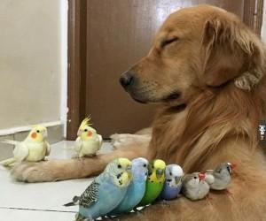 Test na psią cierpliwość
