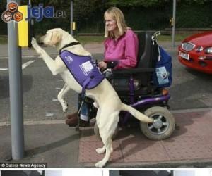 Dowód na psią inteligencję