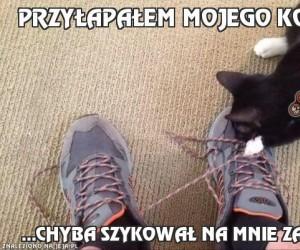 Przyłapałem mojego kota...