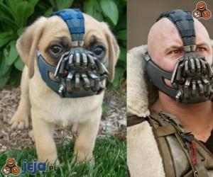 Pomysłowy kaganiec dla psa