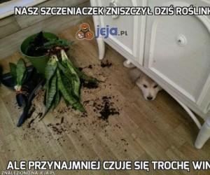 Nasz szczeniaczek zniszczył dziś roślinkę
