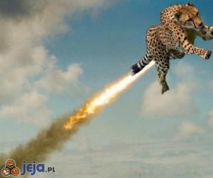 Czy to ptak? Czy to samolot? Nie! To super gepard!