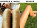Dziewczyna i jej nogi