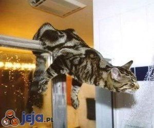 Kot i prysznic