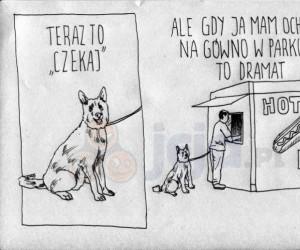 Pies się wkurza