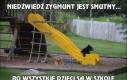 Niedźwiedź Zygmunt jest smutny...