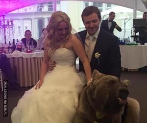 Taki tam, niedźwiedź na weselu