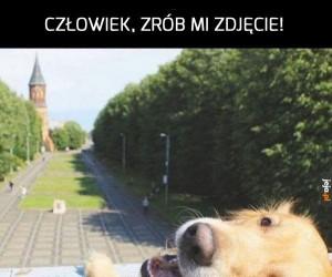 Psie wakacje