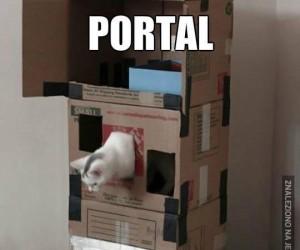 Kot w portalu