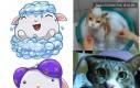 Facebookowe naklejki vs koty