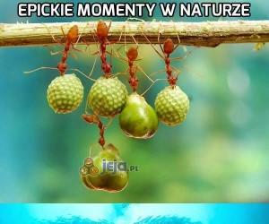 Epickie momenty w naturze