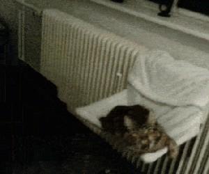 A tu kotek ma języczek