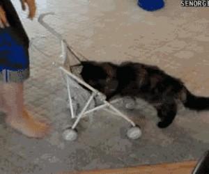 To mój wózeczek!