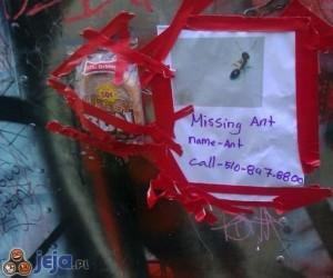 Zaginęła mrówka