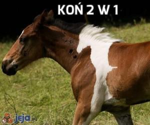 Koń 2 w 1