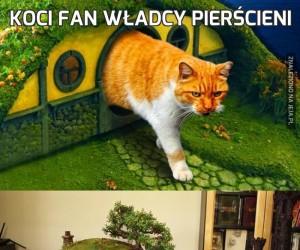 Koci fan Władcy Pierścieni